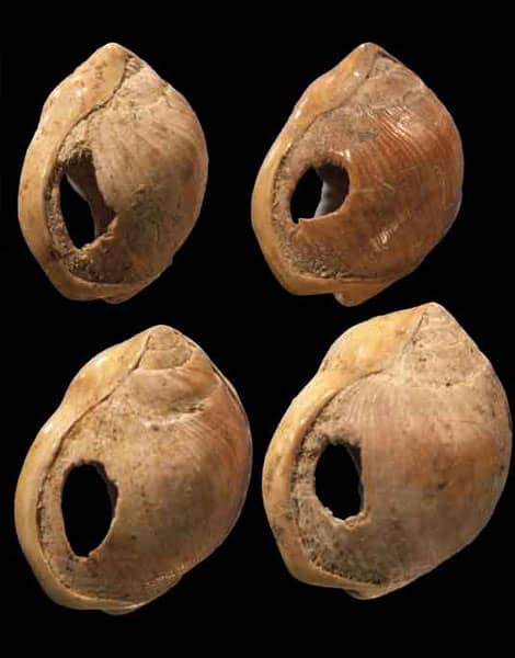 Ancêtre du bijou, Coquillages percés du site de Blombos